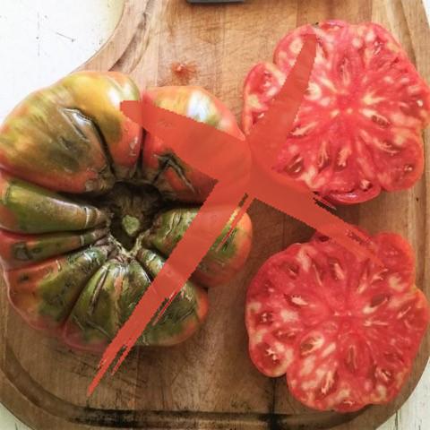 tomate-adelin-morin-échec