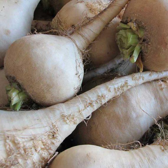 betterave-blanche-albina-verduna