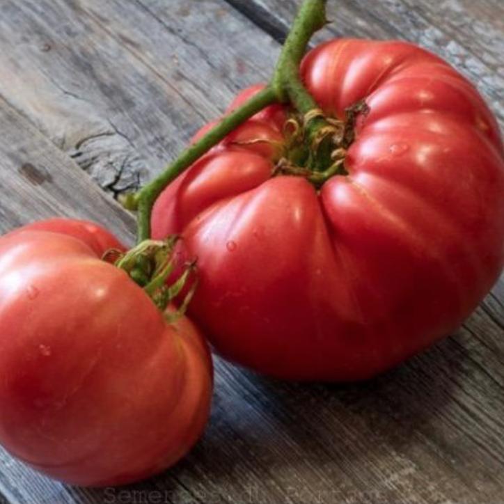 tomate-brandywine