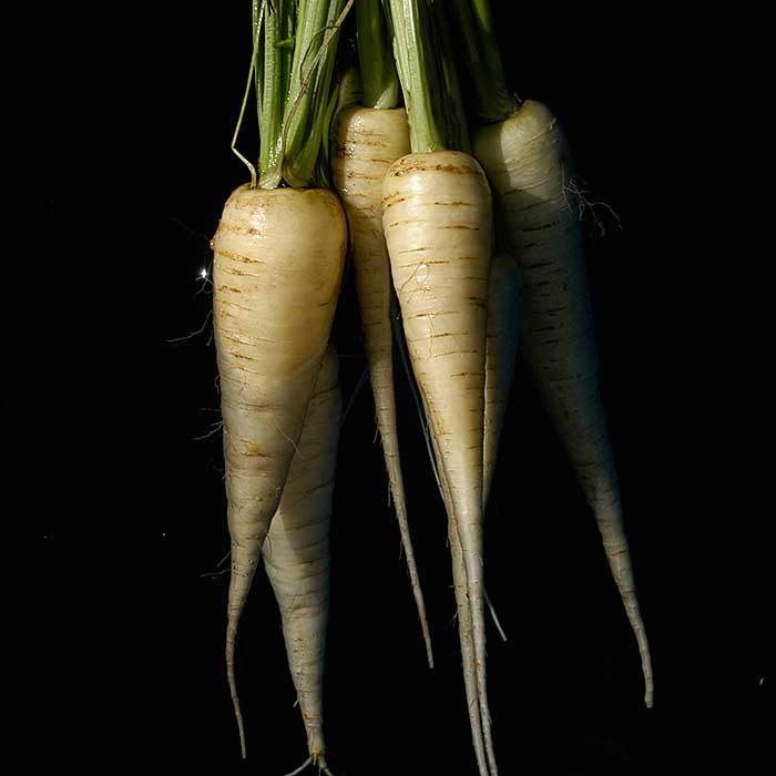 carotte blanche de küttingen