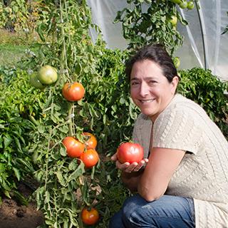 tomate-mémé-de-beauce