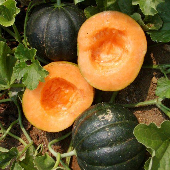 melon-noir-des-carmes